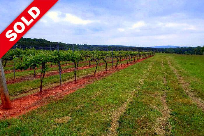 Vista Ridge Vineyard