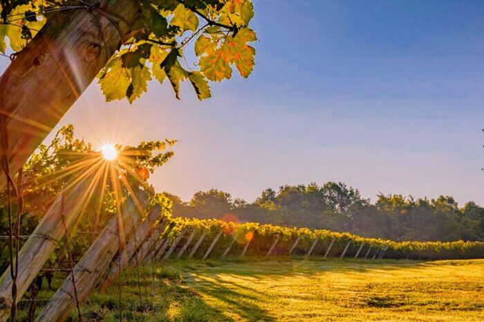 East Coast Wineries for Sale