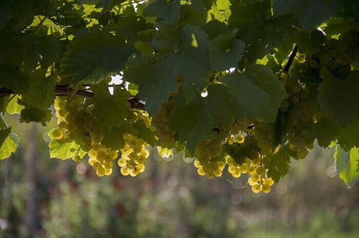Pioneering Vineyard & Winery in Mid-Atlantic
