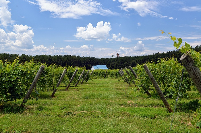 Thistle Gate Vineyard