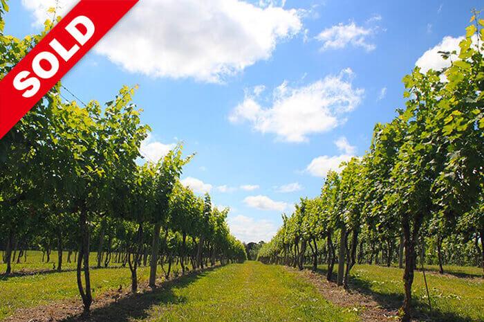 Wisdom Oak Winery